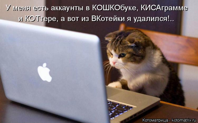 Котоматрица: У меня есть аккаунты в КОШКОбуке, КИСАграмме и КОТтере, а вот из ВКотейки я удалился!..