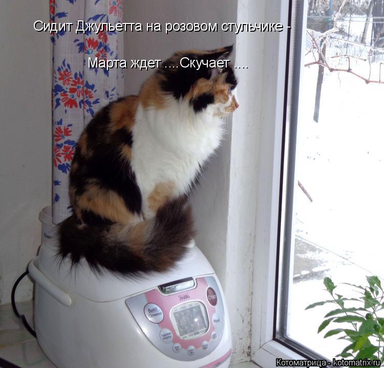 Котоматрица: Сидит Джульетта на розовом стульчике -  Марта ждет ....Скучает ....