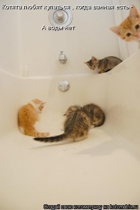 Котоматрица: Котята любят купаться , когда ванная есть - А воды нет