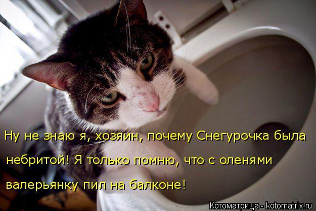 Котоматрица: Ну не знаю я, хозяин, почему Снегурочка была  валерьянку пил на балконе! небритой! Я только помню, что с оленями
