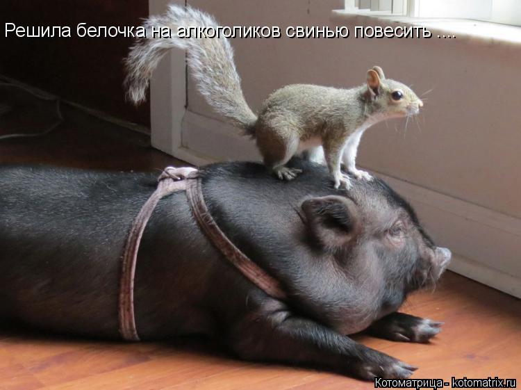 Котоматрица: Решила белочка на алкоголиков свинью повесить ....