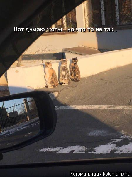 Котоматрица: Вот думаю :коты , но что то не так .