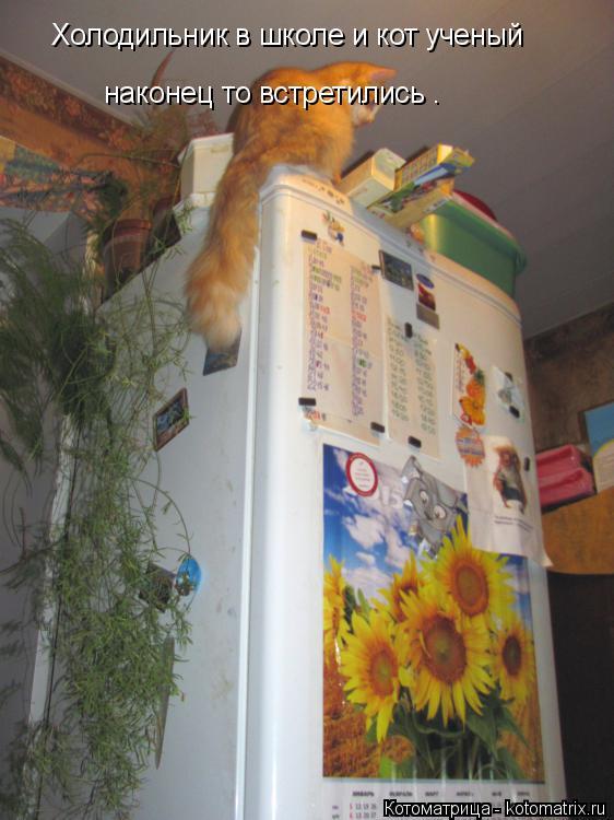 Котоматрица: Холодильник в школе и кот ученый наконец то встретились .