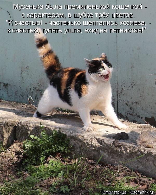 """Котоматрица: Мусенька была премиленькой кошечкой - к счастью, гулять ушла, ехидна пятнистая!"""" """"К счастью! - частенько шептались хозяева, - с характером, в ш"""