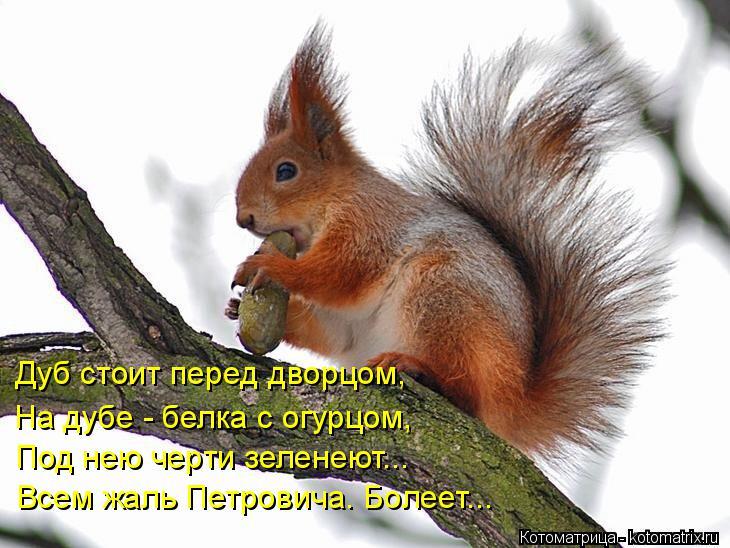 Котоматрица: Дуб стоит перед дворцом, На дубе - белка с огурцом, Под нею черти зеленеют... Всем жаль Петровича. Болеет...