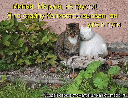 Котоматрица: Милая, Маруся, не грусти! Я по скайпу Калиостро вызвал, он уже в пути...