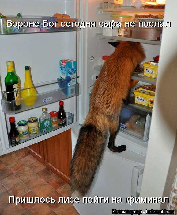 Котоматрица: Вороне Бог сегодня сыра не послал Пришлось лисе пойти на криминал