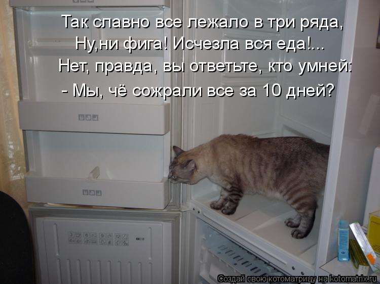 Котоматрица: Так славно все лежало в три ряда, Ну,ни фига! Исчезла вся еда!... Нет, правда, вы ответьте, кто умней: - Мы, чё сожрали все за 10 дней?
