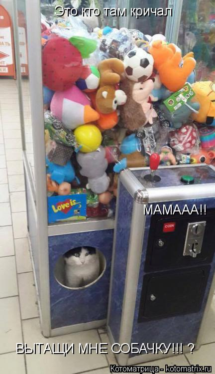 Котоматрица: Это кто там кричал МАМААА!! ВЫТАЩИ МНЕ СОБАЧКУ!!! ?