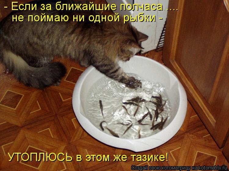 Котоматрица: - Если за ближайшие полчаса .... не поймаю ни одной рыбки - УТОПЛЮСЬ в этом же тазике!