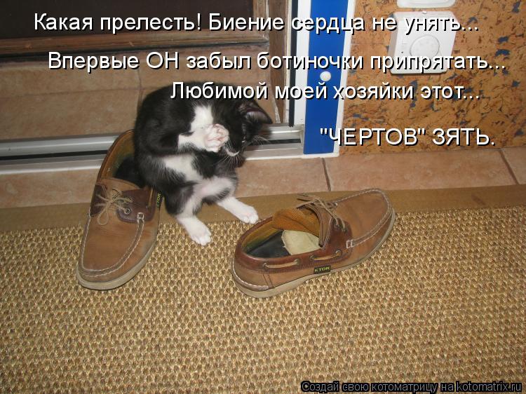 """Котоматрица: Какая прелесть! Биение сердца не унять... Впервые ОН забыл ботиночки припрятать... Любимой моей хозяйки этот... """"ЧЕРТОВ"""" ЗЯТЬ."""
