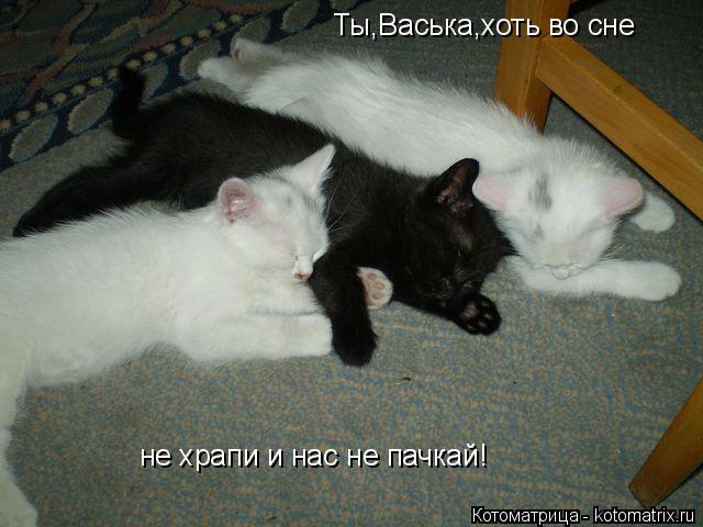 Котоматрица: Ты,Васька,хоть во сне не храпи и нас не пачкай!