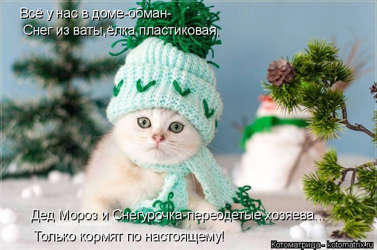 Котоматрица: Всё у нас в доме-обман- Дед Мороз и Снегурочка-переодетые хозяева... Только кормят по настоящему! Снег из ваты,ёлка пластиковая,