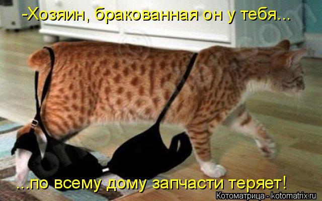 Котоматрица: -Хозяин, бракованная он у тебя... ...по всему дому запчасти теряет!