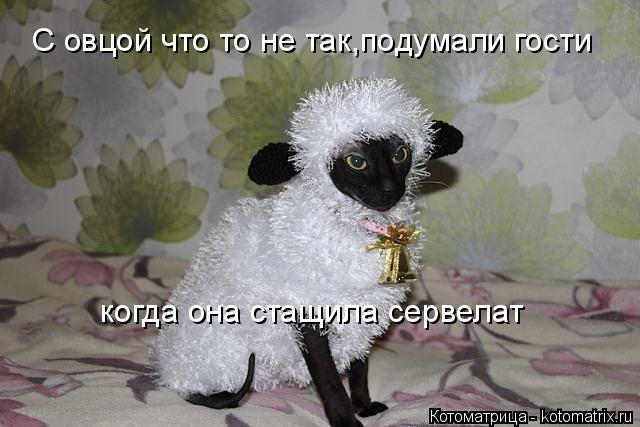 Котоматрица: С овцой что то не так,подумали гости  когда она стащила сервелат