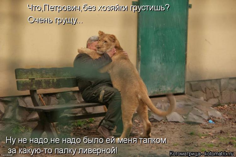 Котоматрица: Что,Петрович,без хозяйки грустишь? Очень грущу... Ну не надо,не надо было ей меня тапком  за какую-то палку ливерной!