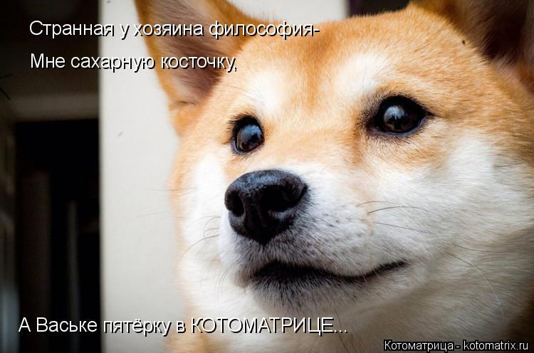 Котоматрица: Странная у хозяина философия- Мне сахарную косточку, А Ваське пятёрку в КОТОМАТРИЦЕ...