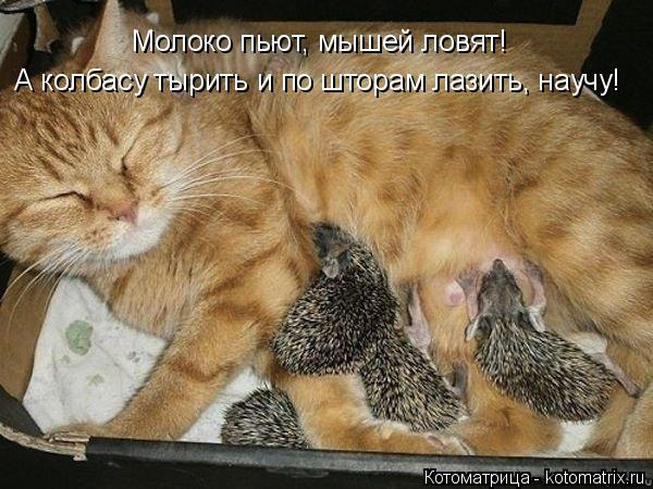 Котоматрица: Молоко пьют, мышей ловят! А колбасу тырить и по шторам лазить, научу!