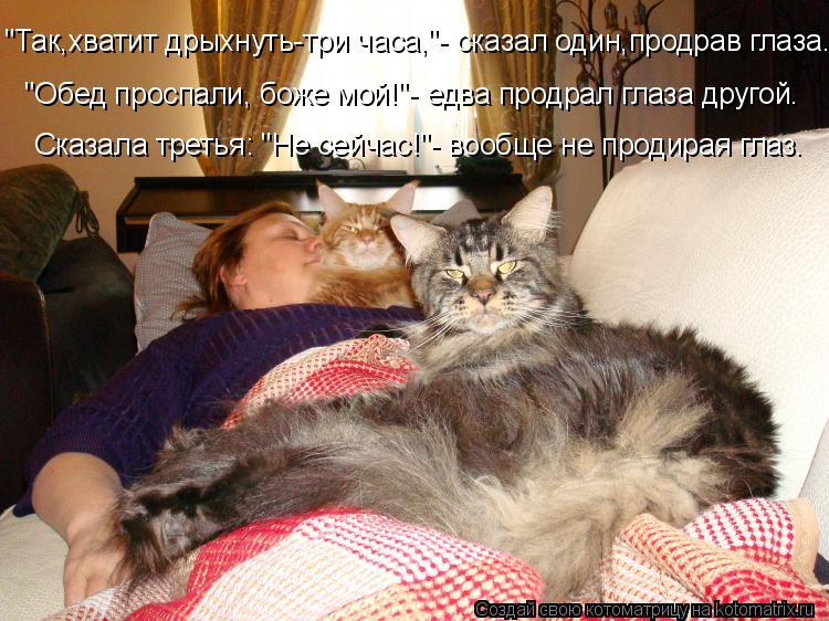 """Котоматрица: """"Так,хватит дрыхнуть-три часа,""""- сказал один,продрав глаза. """"Обед проспали, боже мой!""""- едва продрал глаза другой. Сказала третья: """"Не сейчас!""""- в"""