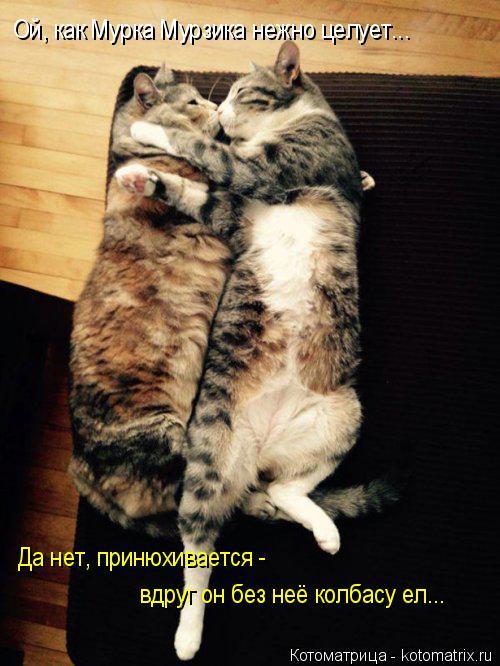 Котоматрица: Ой, как Мурка Мурзика нежно целует... Да нет, принюхивается - вдруг он без неё колбасу ел...