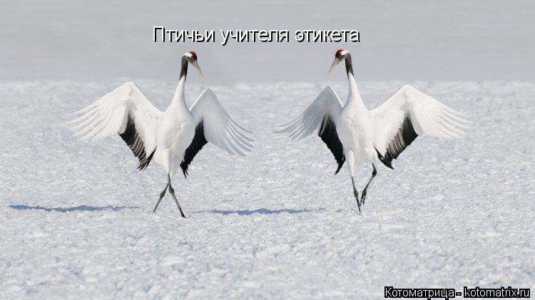 Котоматрица: Птичьи учителя этикета