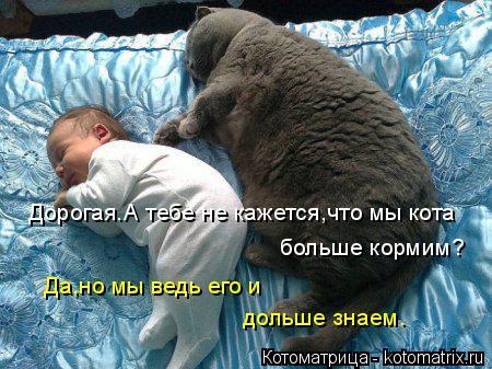 Котоматрица: Дорогая.А тебе не кажется,что мы кота  больше кормим? Да,но мы ведь его и  дольше знаем.