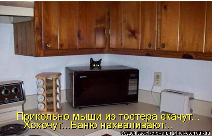 Котоматрица: Прикольно мыши из тостера скачут... Хохочут...Баню нахваливают...