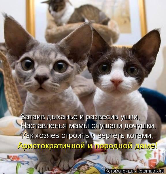 Котоматрица: Как хозяев строить и вертеть котами, Затаив дыханье и развесив ушки, Наставленья мамы слушали дочушки. Аристократичной и породной даме!