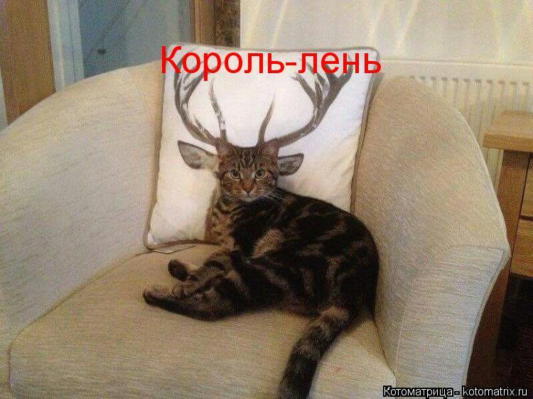 Котоматрица: . Король-лень