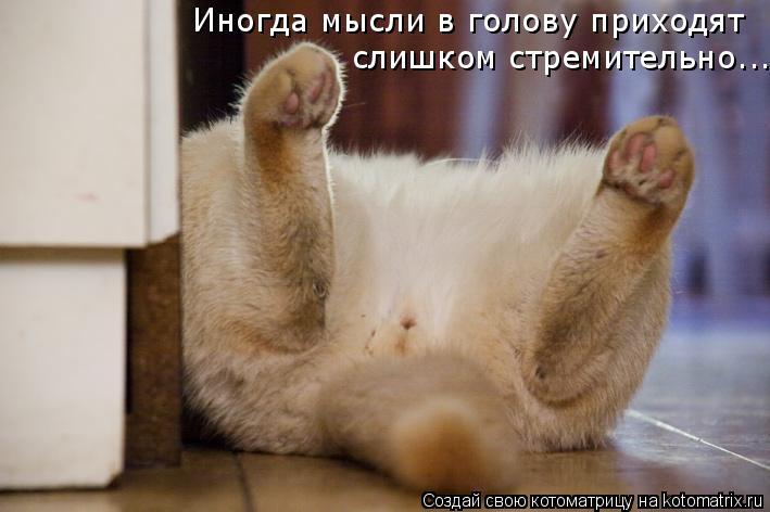 Котоматрица: Иногда мысли в голову приходят слишком стремительно...