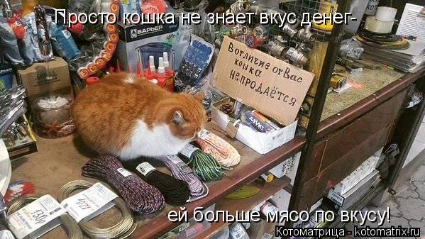 Котоматрица: Просто кошка не знает вкус денег- ей больше мясо по вкусу!