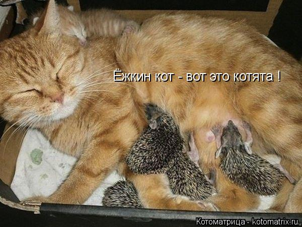 Котоматрица: Ёжкин кот - вот это котята !