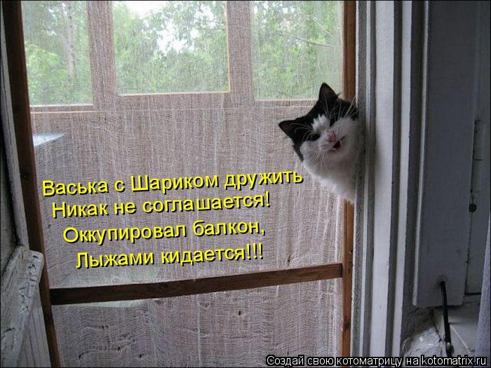 Котоматрица: Васька с Шариком дружить Никак не соглашается! Оккупировал балкон, Лыжами кидается!!!