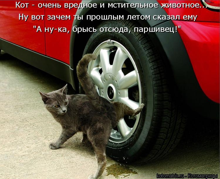 пламенем, она переехал кошку на машине примета отучить ребенка ночного