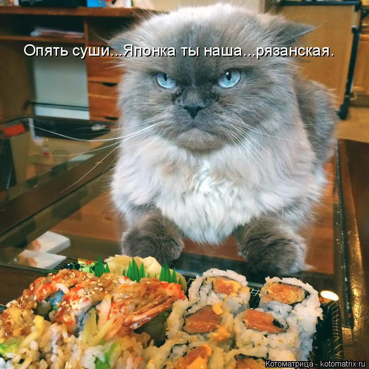 Котоматрица: Опять суши...Японка ты наша...рязанская.