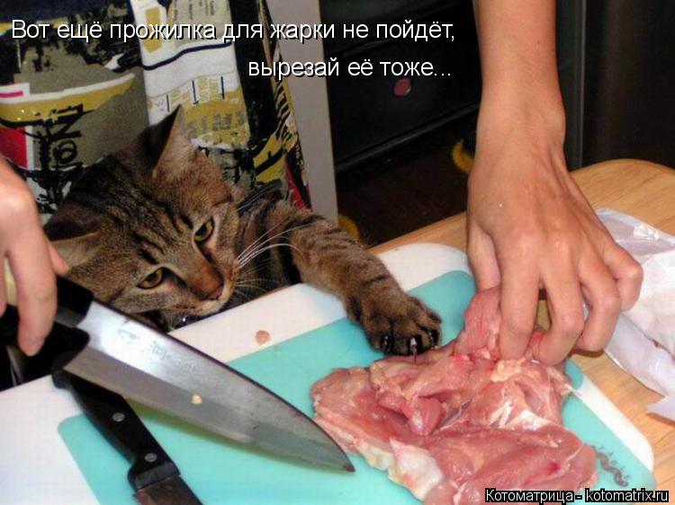 Котоматрица: Вот ещё прожилка для жарки не пойдёт, вырезай её тоже...