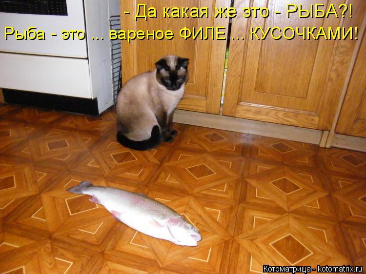 Котоматрица: - Да какая же это - РЫБА?! Рыба - это ... вареное ФИЛЕ ... КУСОЧКАМИ!