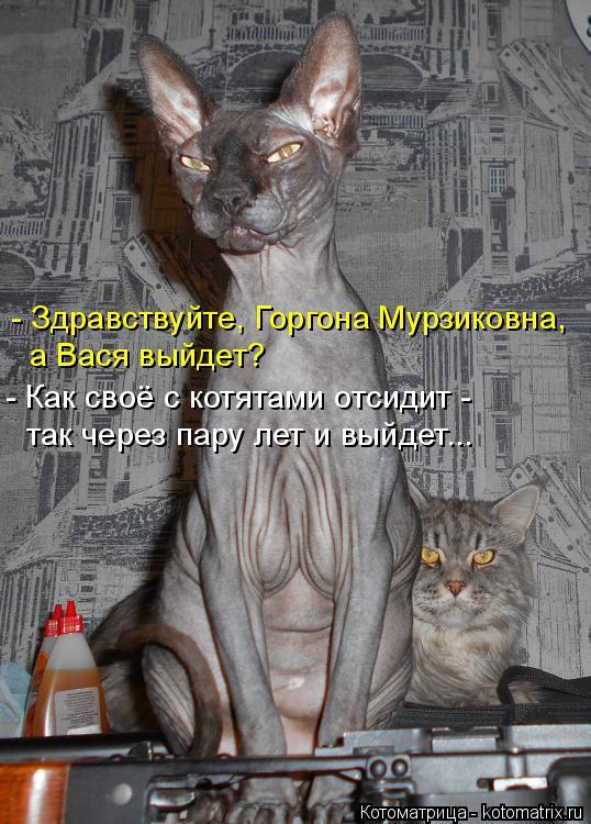 Котоматрица: - Здравствуйте, Горгона Мурзиковна, а Вася выйдет? - Как своё с котятами отсидит -  так через пару лет и выйдет...
