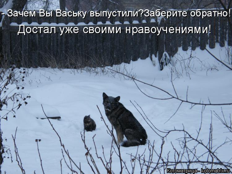Котоматрица: - Зачем Вы Ваську выпустили?Заберите обратно! Достал уже своими нравоучениями!