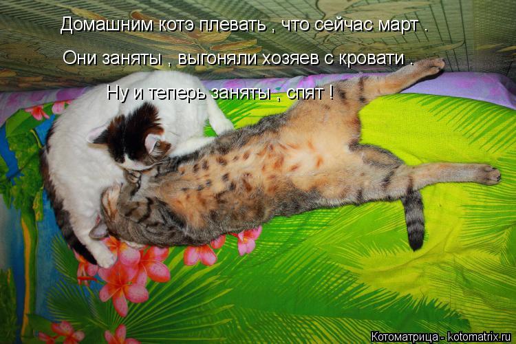 Котоматрица: Домашним котэ плевать , что сейчас март . Они заняты , выгоняли хозяев с кровати . Ну и теперь заняты , спят !