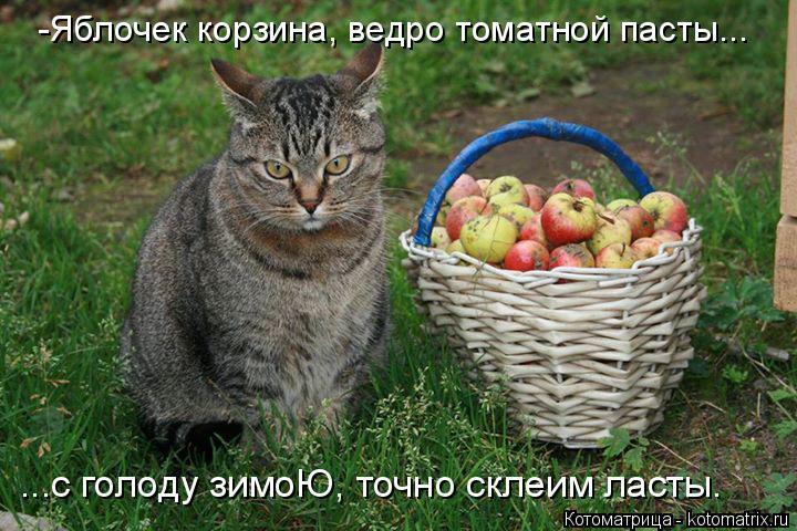 Котоматрица: -Яблочек корзина, ведро томатной пасты... ...с голоду зимоЮ, точно склеим ласты.