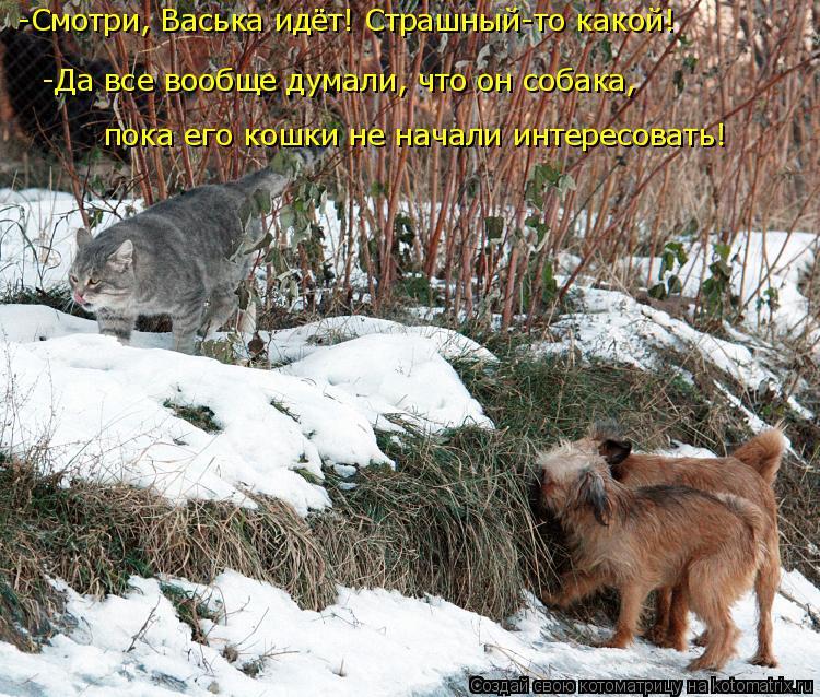 Котоматрица: -Смотри, Васька идёт! Страшный-то какой! -Да все вообще думали, что он собака,  пока его кошки не начали интересовать!