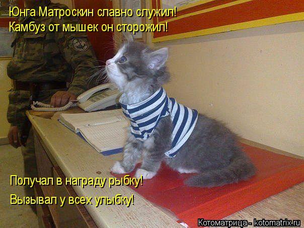 Котоматрица: Юнга Матроскин славно служил! Камбуз от мышек он сторожил! Получал в награду рыбку! Вызывал у всех улыбку!