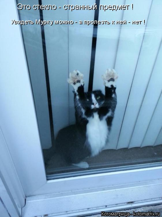 Котоматрица: Это стекло - странный предмет ! Увидеть Мурку можно - а пролезть к ней - нет !