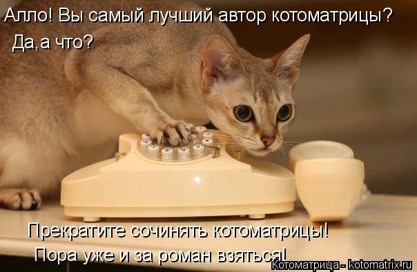 Котоматрица: Алло! Вы самый лучший автор котоматрицы? Да,а что? Прекратите сочинять котоматрицы! Пора уже и за роман взяться!
