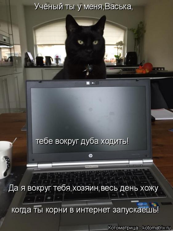 Котоматрица: Учёный ты у меня,Васька, тебе вокруг дуба ходить! Да я вокруг тебя,хозяин,весь день хожу когда ты корни в интернет запускаешь!
