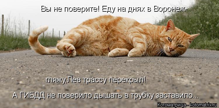Котоматрица: Вы не поверите! Еду на днях в Воронеж- гляжу,Лев трассу перекрыл! А ГИБДД не поверило,дышать в трубку заставило...
