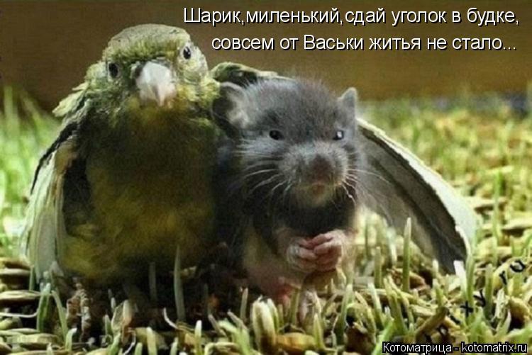 Котоматрица: Шарик,миленький,сдай уголок в будке, совсем от Васьки житья не стало...