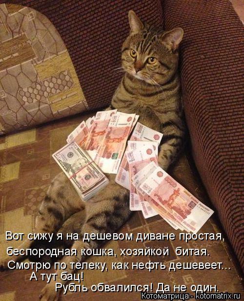 Котоматрица: беспородная кошка, хозяйкой  битая. Вот сижу я на дешевом диване простая, Смотрю по телеку, как нефть дешевеет... А тут бац! Рубль обвалился! Д
