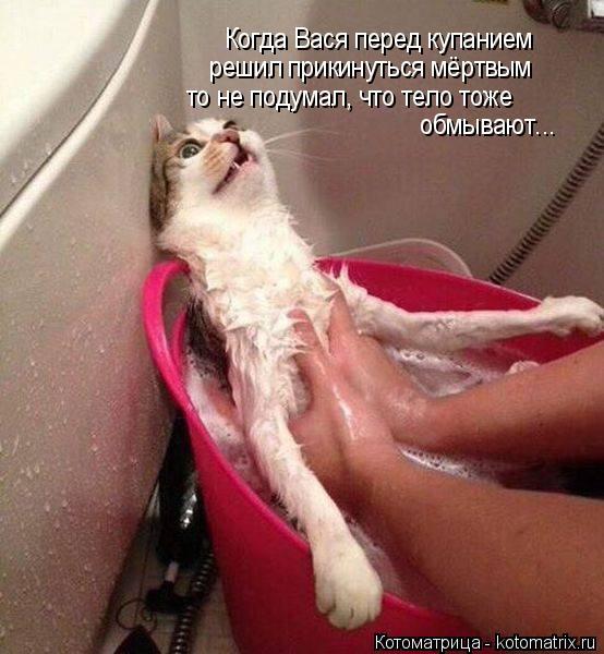 Котоматрица: Когда Вася перед купанием  решил прикинуться мёртвым то не подумал, что тело тоже обмывают...